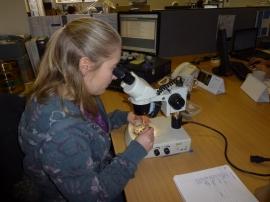 Environmental archaeologist