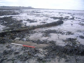 Submerged forest near Hinkley Point (Gloucestershire County Council)